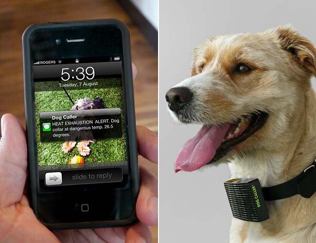 heat-sensing-dog-collar